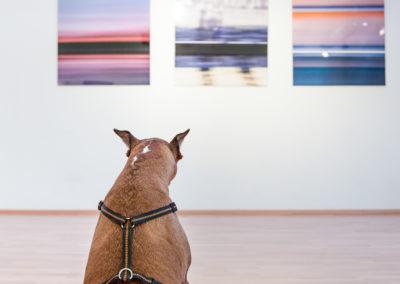 Ausstellung mit Smartphone-Fotos (5)